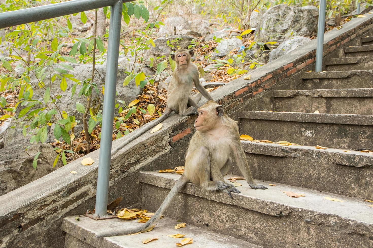 mono en el bosque foto