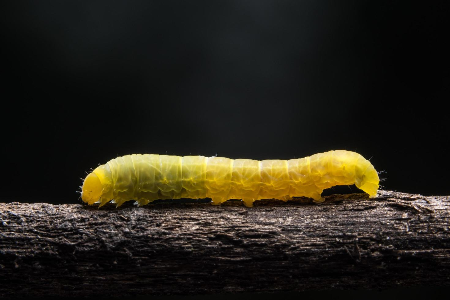 Worm on a branch photo