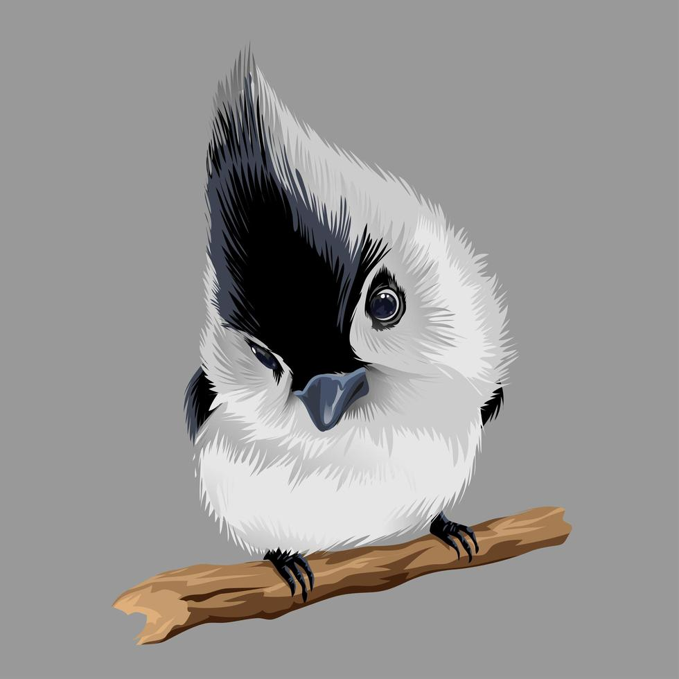 Small black and white bird with little beak and with a big tuft vector