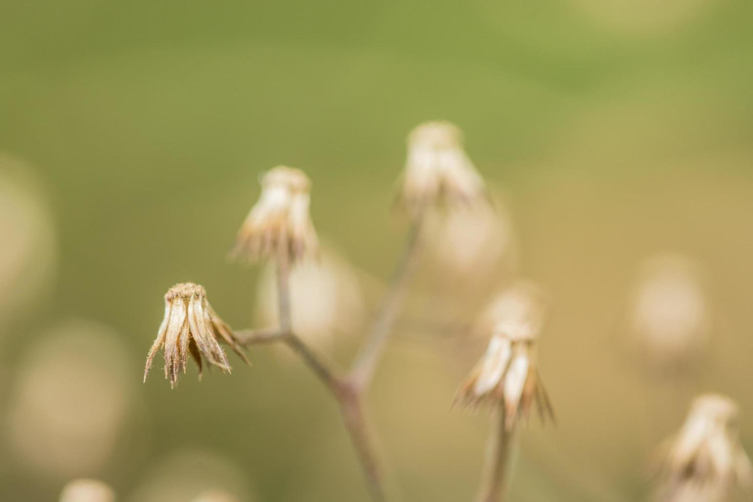 flor silvestre, foto de primer plano