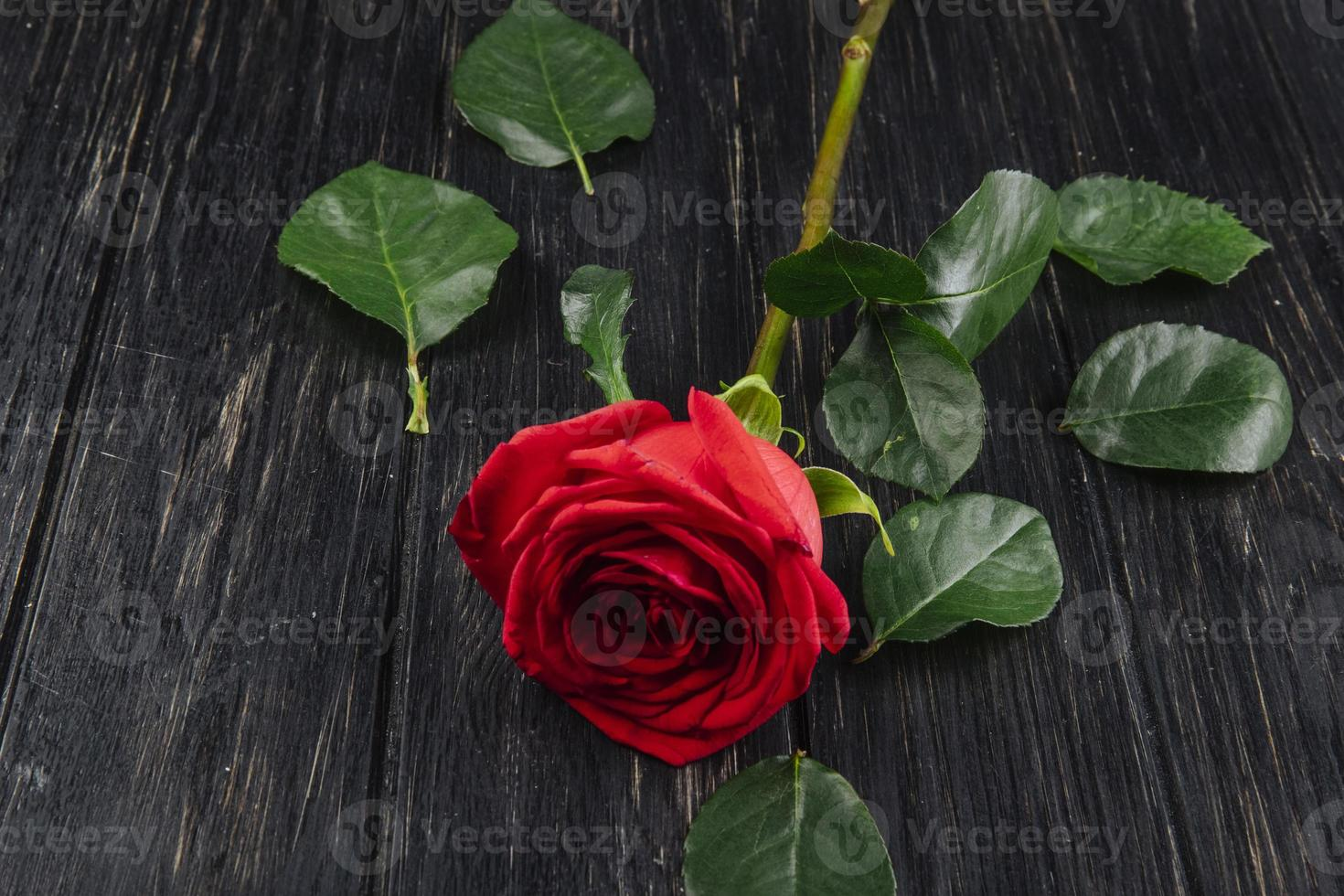 Red rose with green leaves on a dark wooden background photo