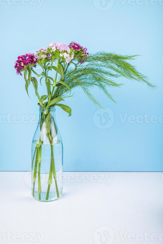 Flores de clavel en una botella de vidrio sobre un fondo azul. foto