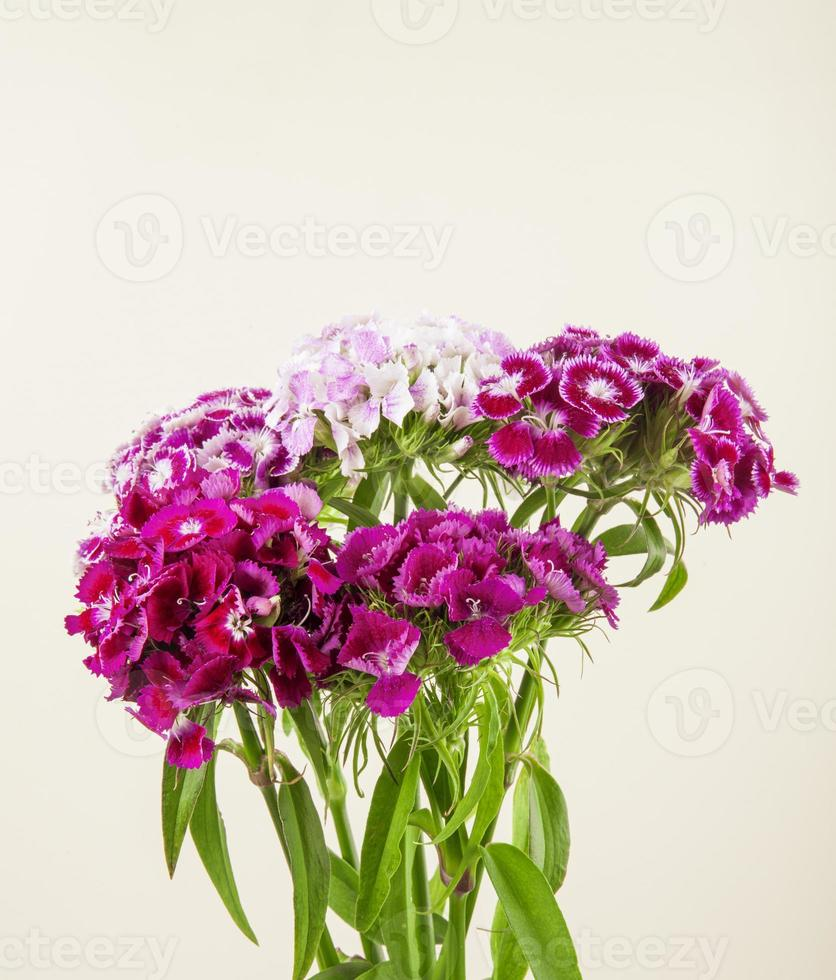 Ramo de flores púrpuras y blancas sobre un fondo blanco. foto