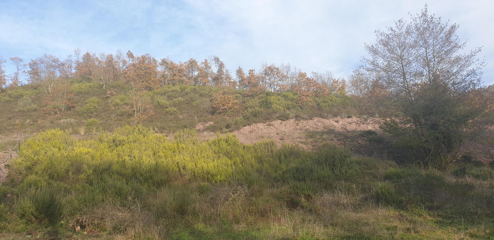 Natural landscape forest photo