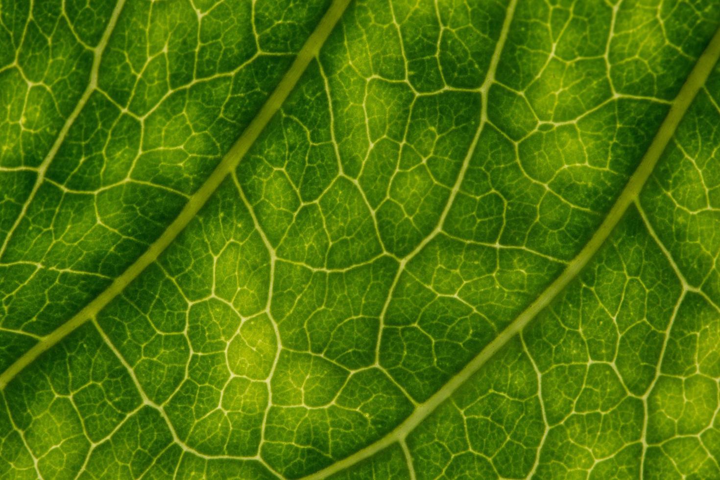 fondo de hoja verde foto