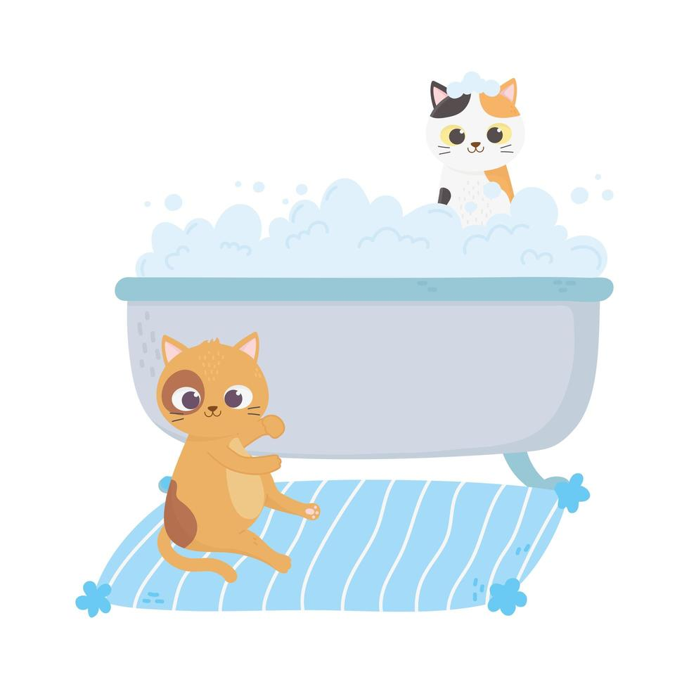cats make me happy, cat in carpet and kitten in bathtub washing vector