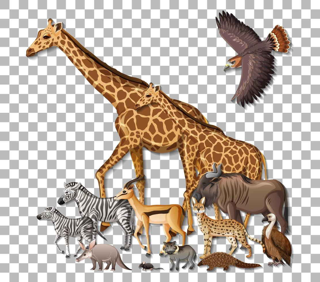 Group of wild african animals on transparent background vector