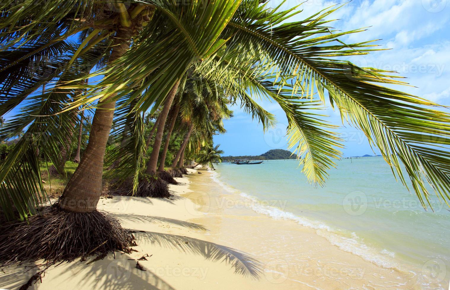 View of tropical beach through branches palm. Koh Samui photo