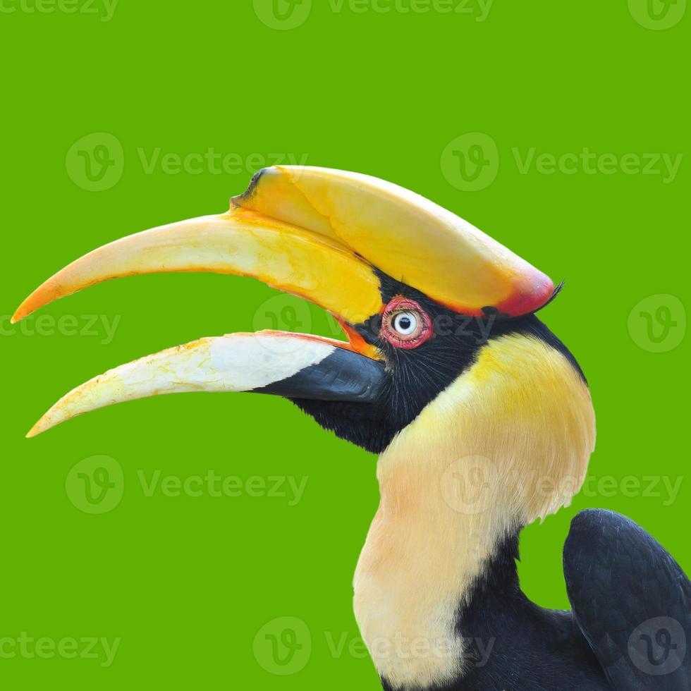 head of hornbill photo