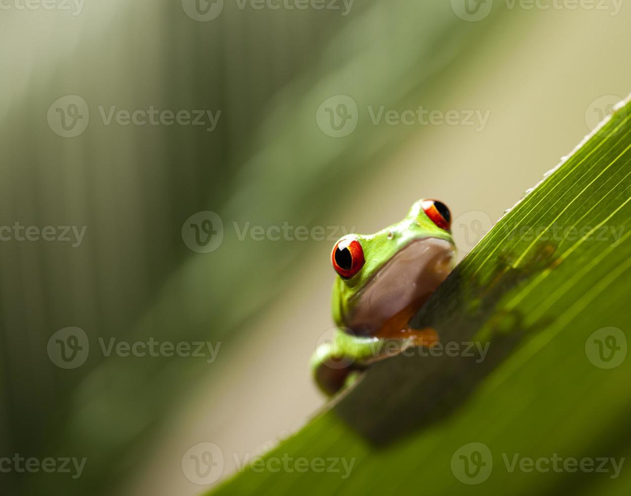 Frog shadow on the leaf photo