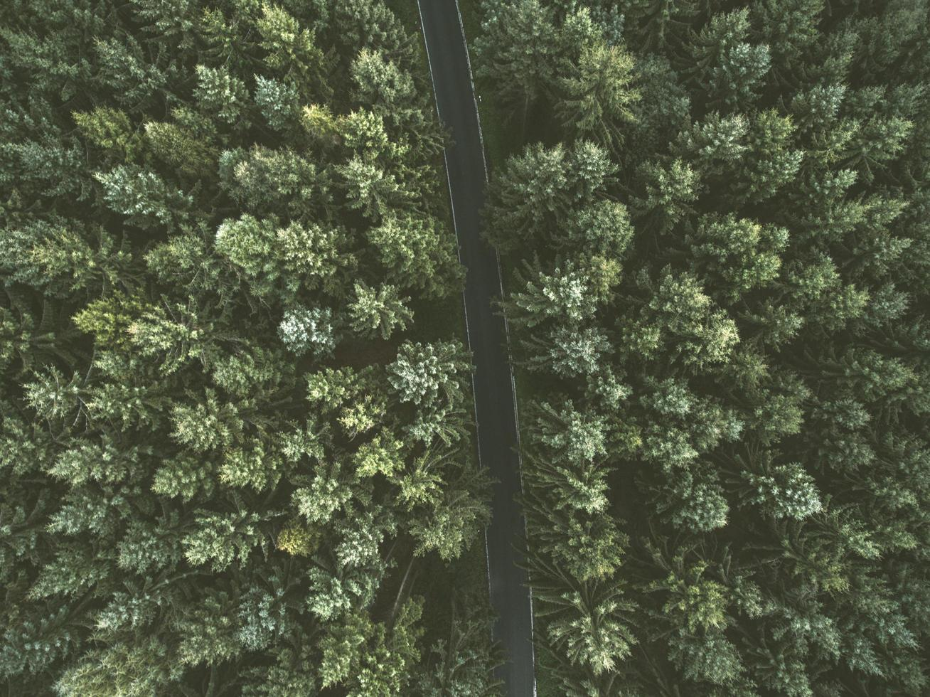 Aerial view of a road between trees photo