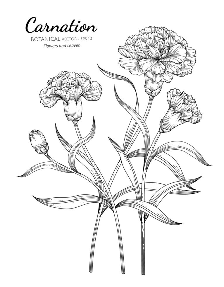 Carnation Flower and Leaf Hand Drawn Designs vector