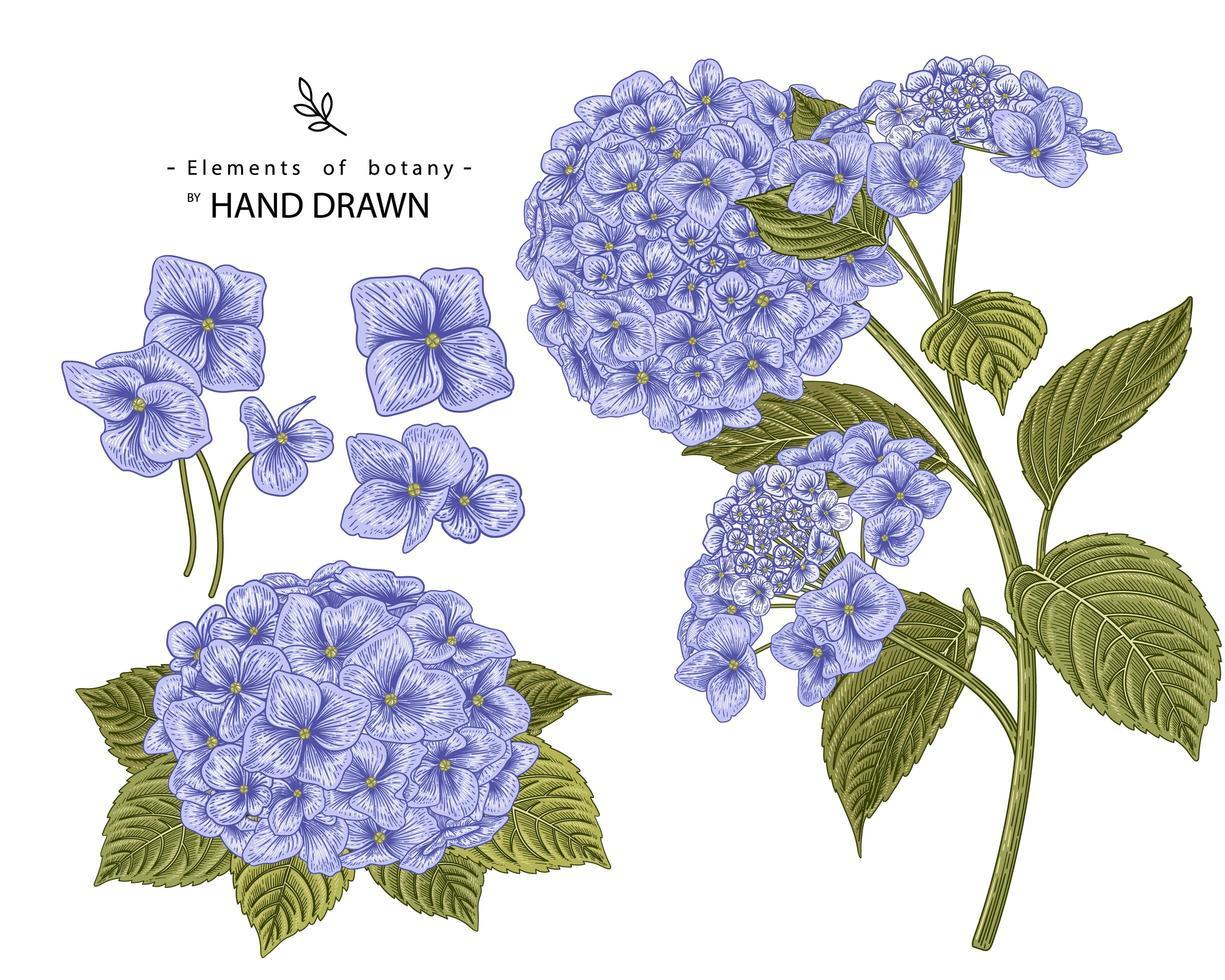 flor de hortensia elementos dibujados a mano vector
