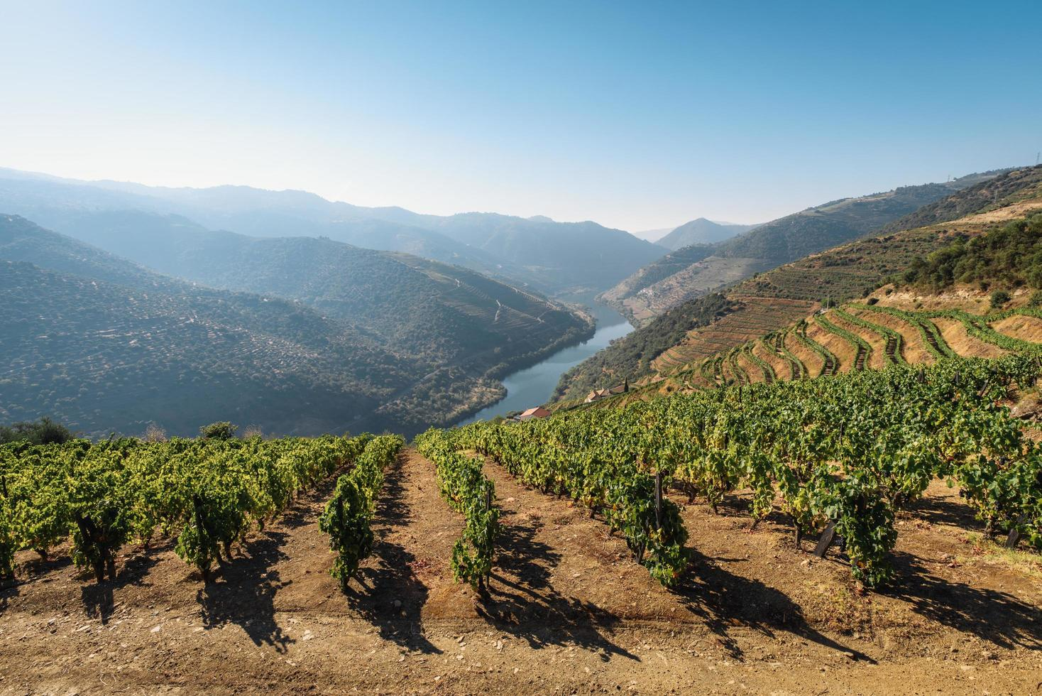 Vineyards in Douro Valley, Portugal photo
