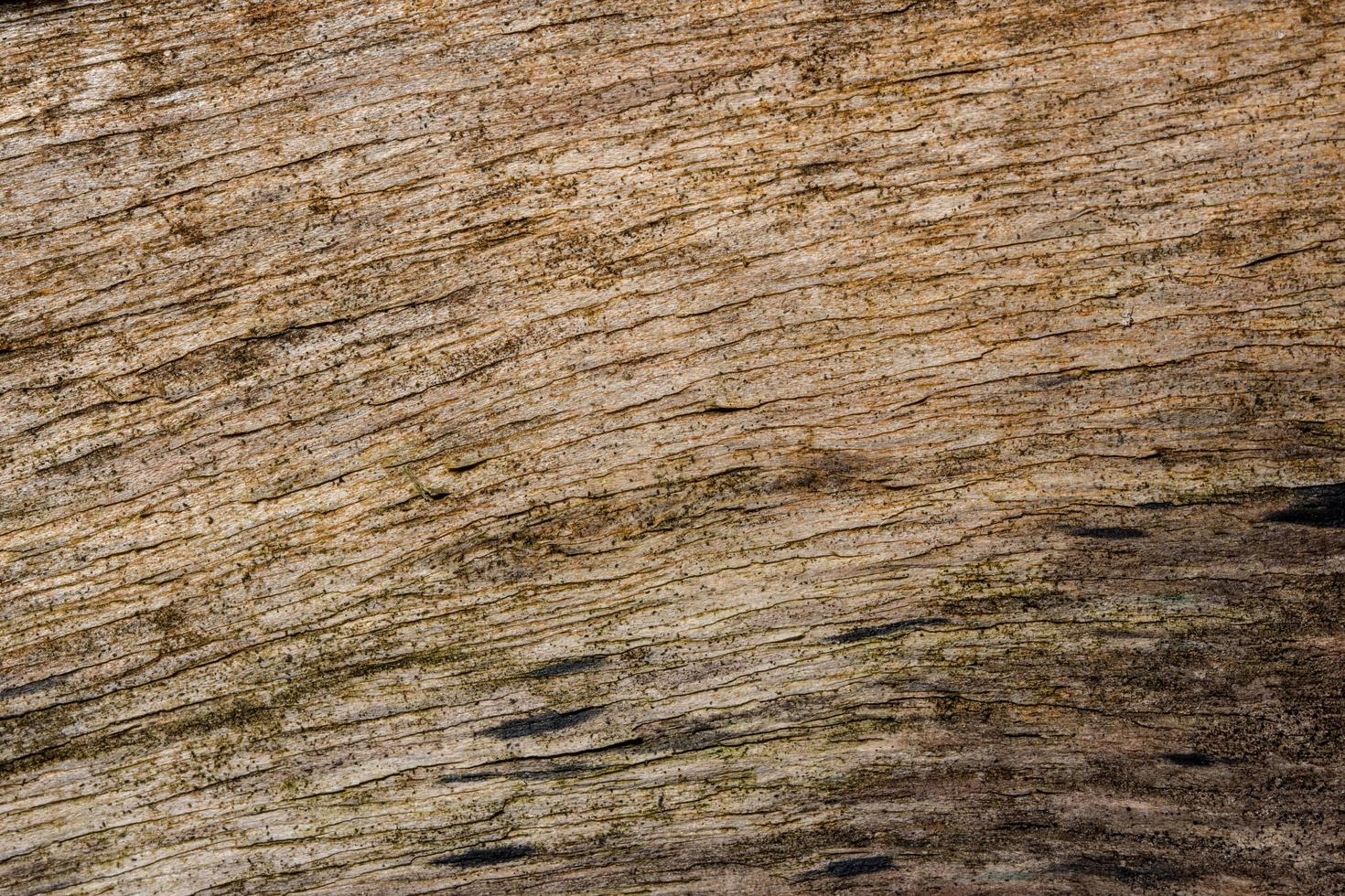 Wood texture background photo