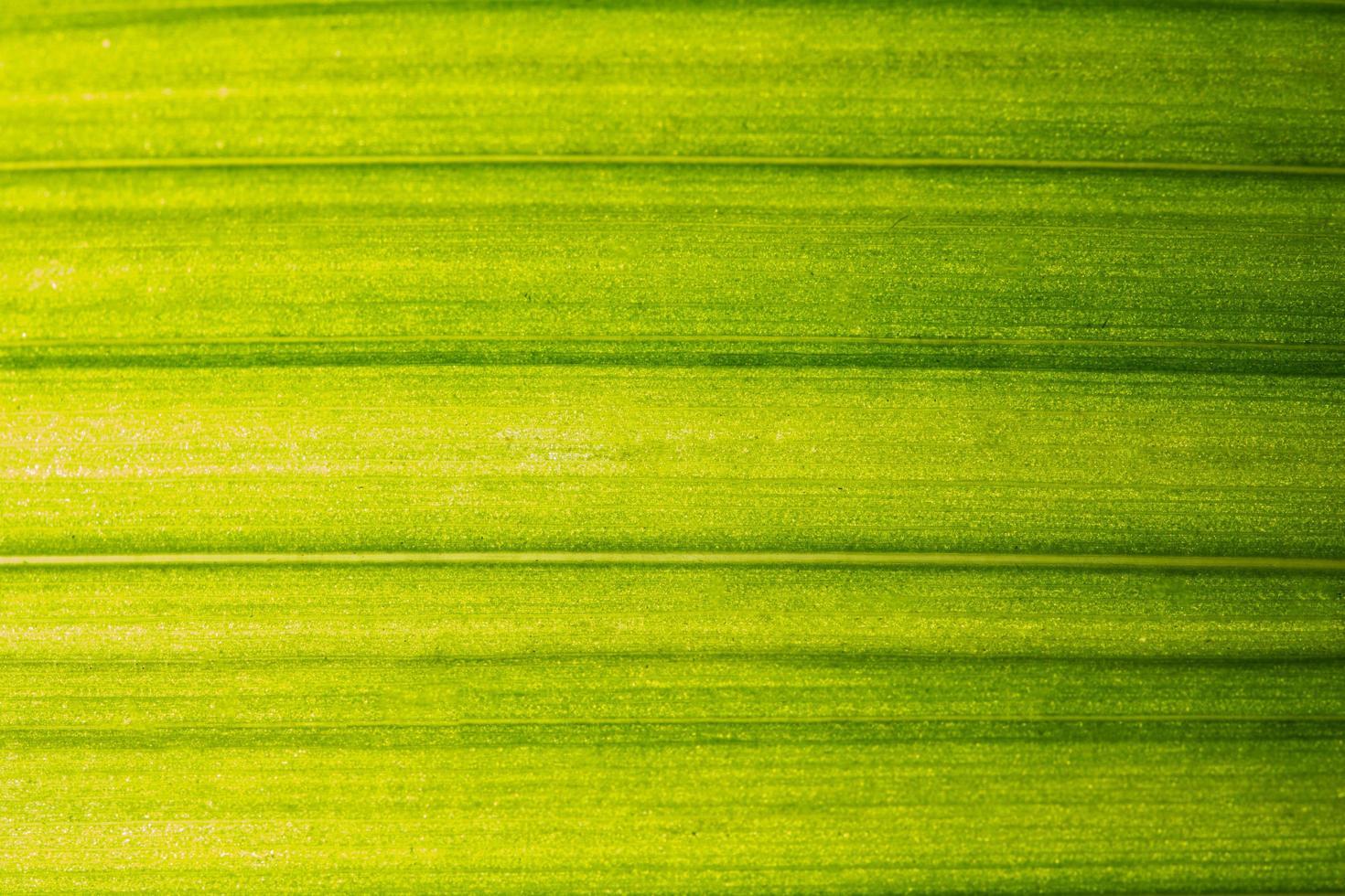 patrón de hoja verde foto