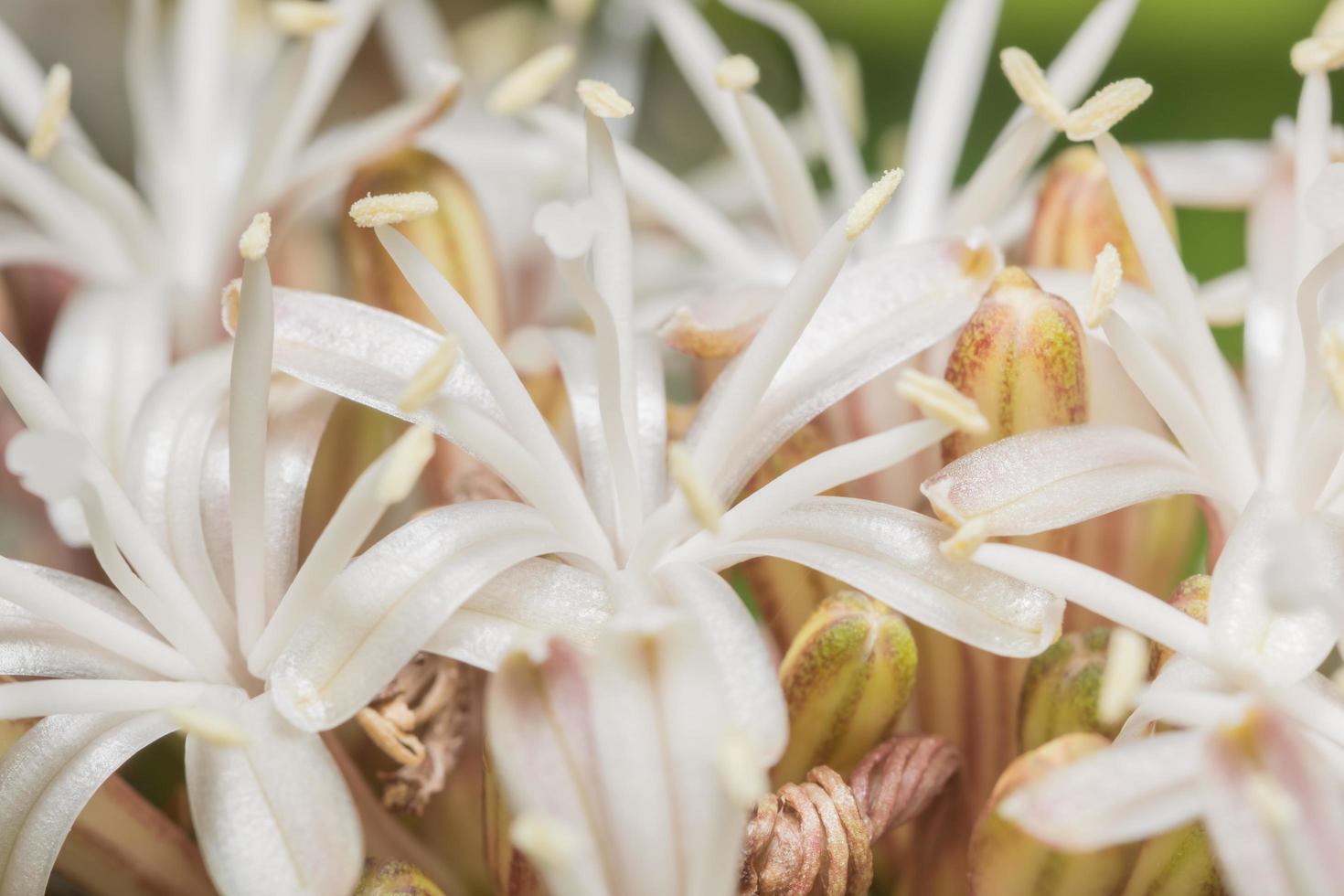 White flower background photo