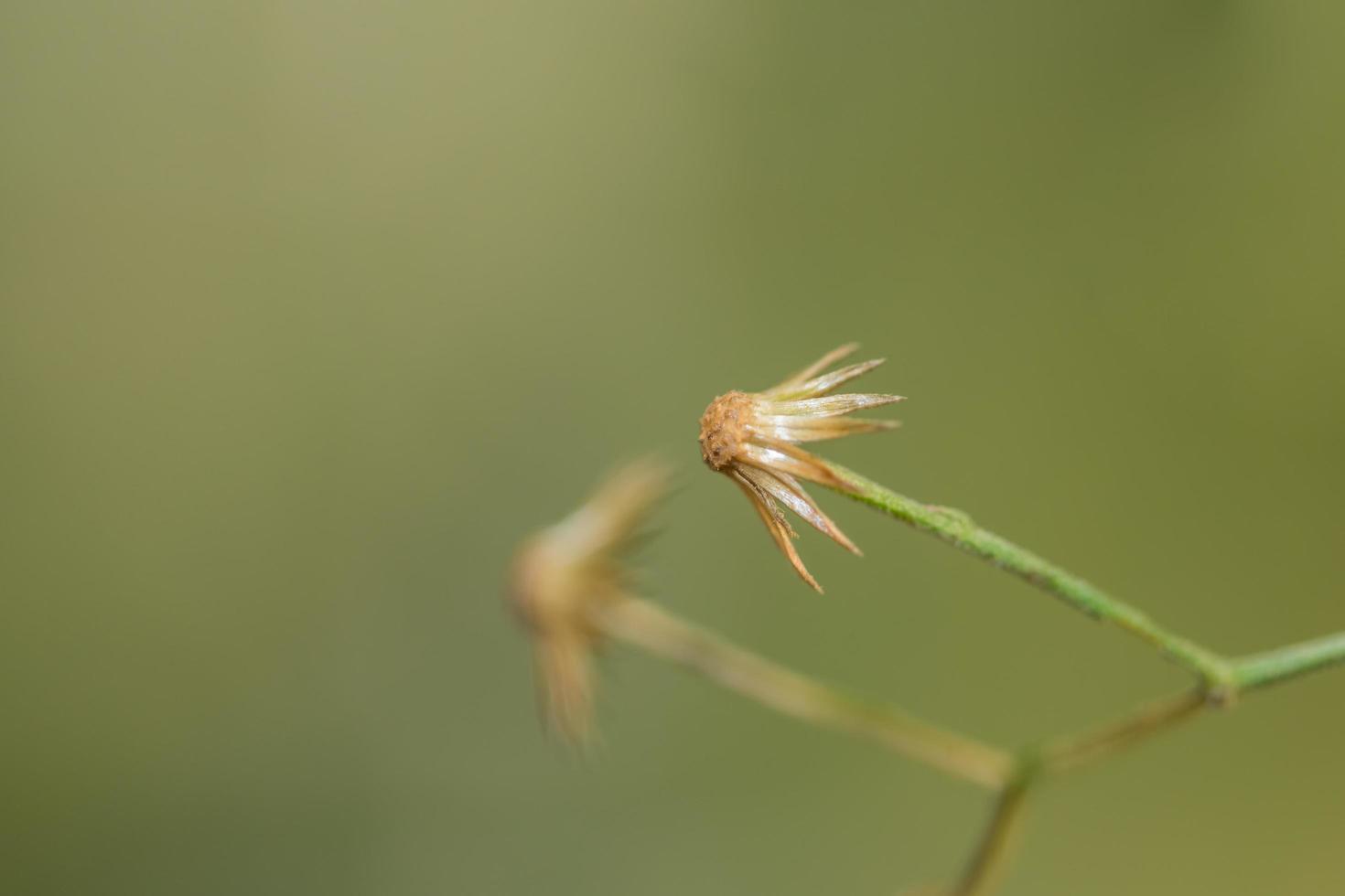 primer plano de flores silvestres foto