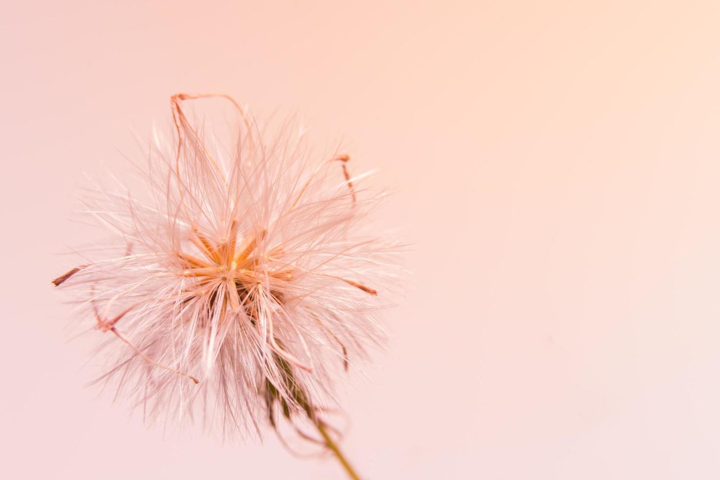 Grass flower close-up photo