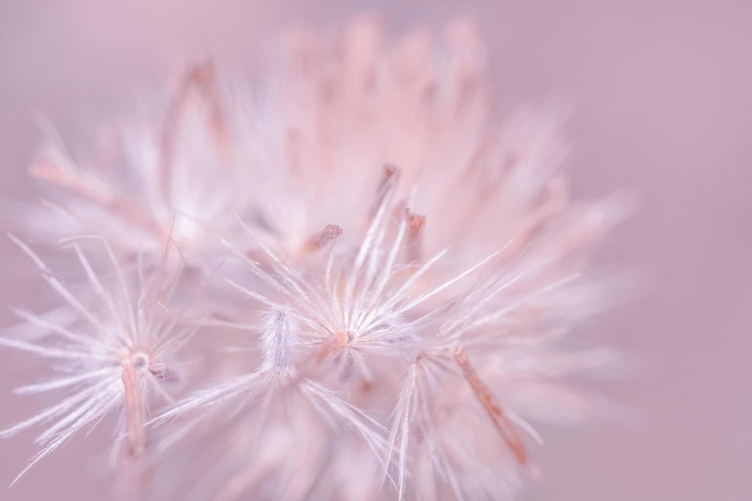 foto de primer plano de flores silvestres