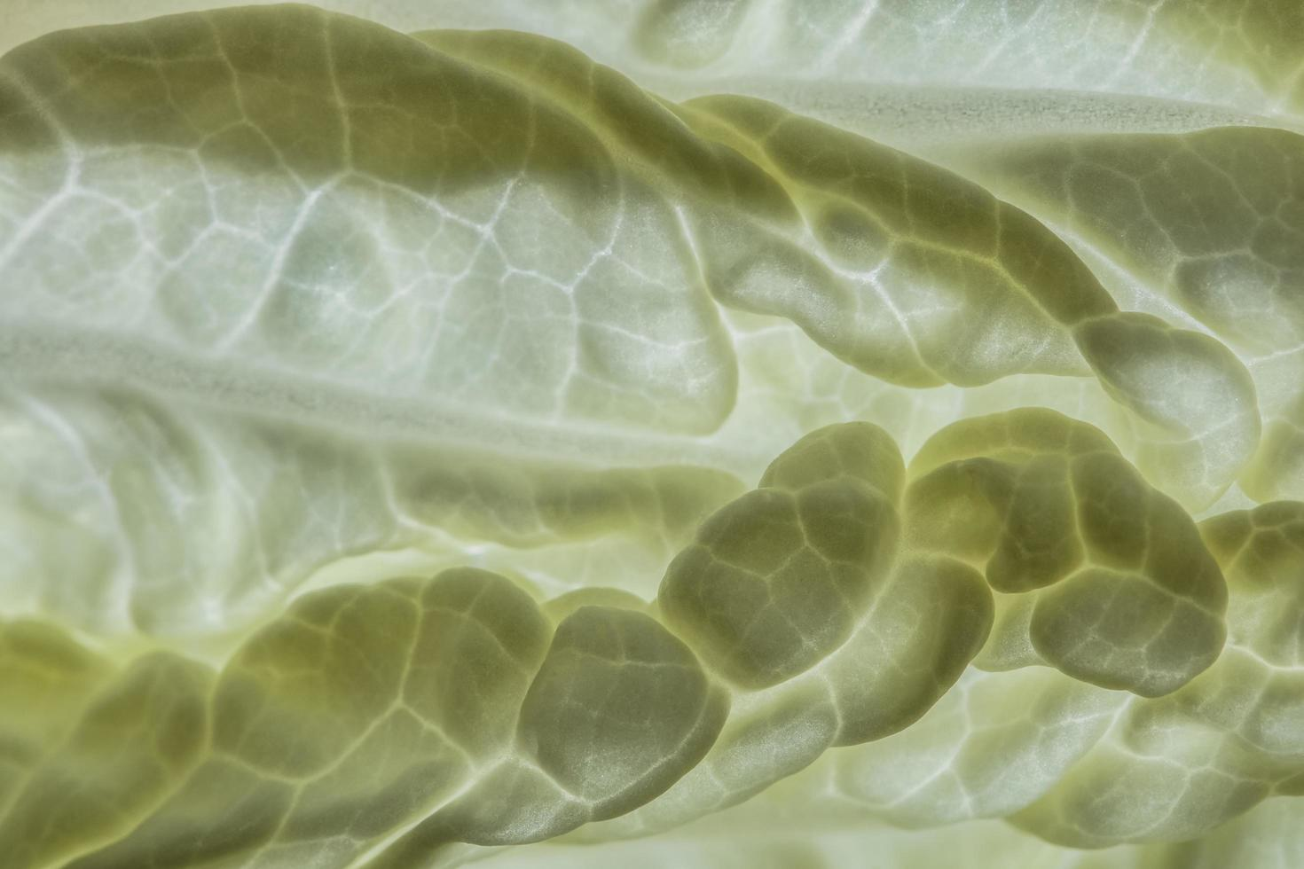 Background from Napa cabbage photo