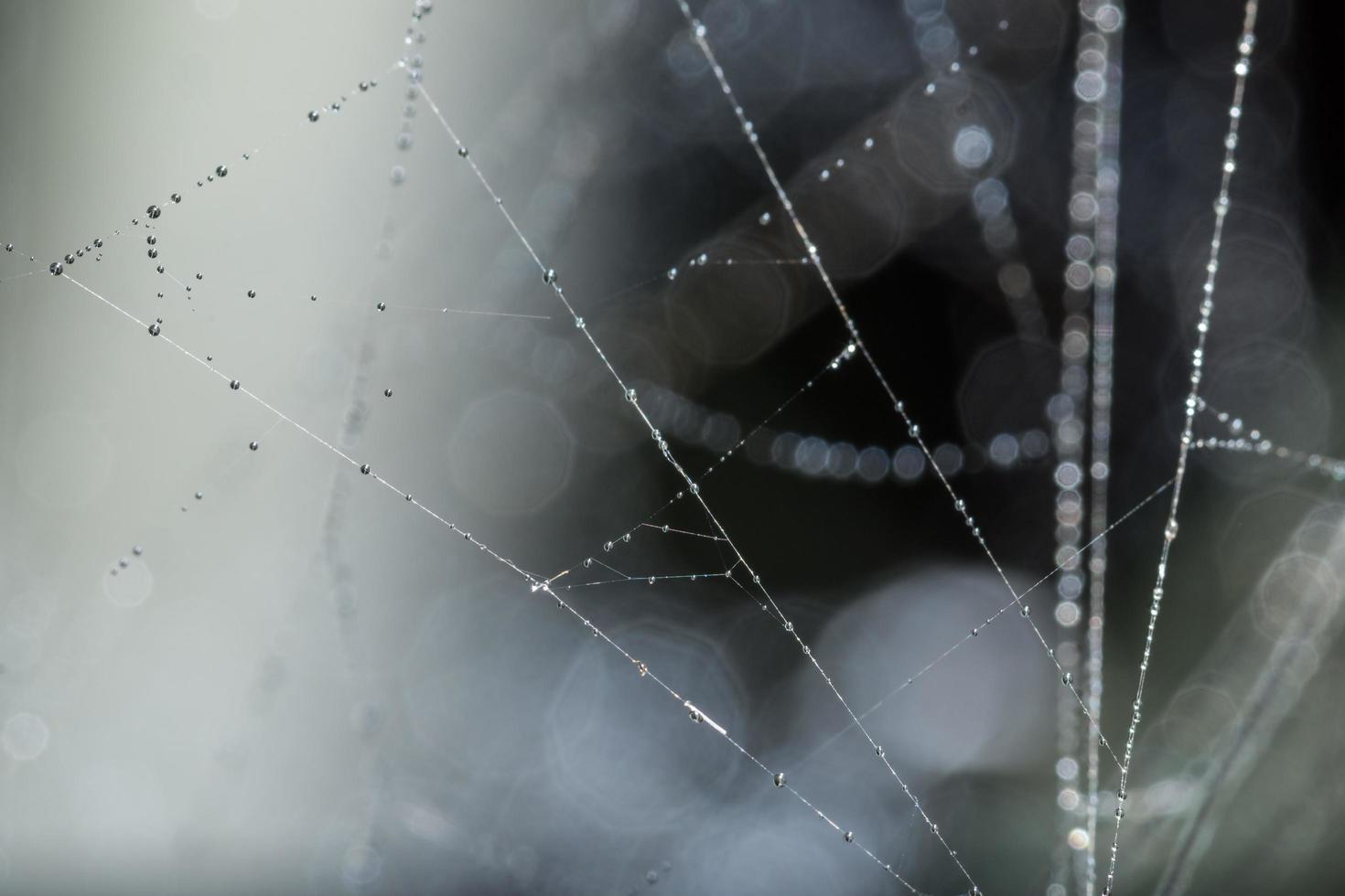 Gotas de agua sobre la telaraña, primer plano foto