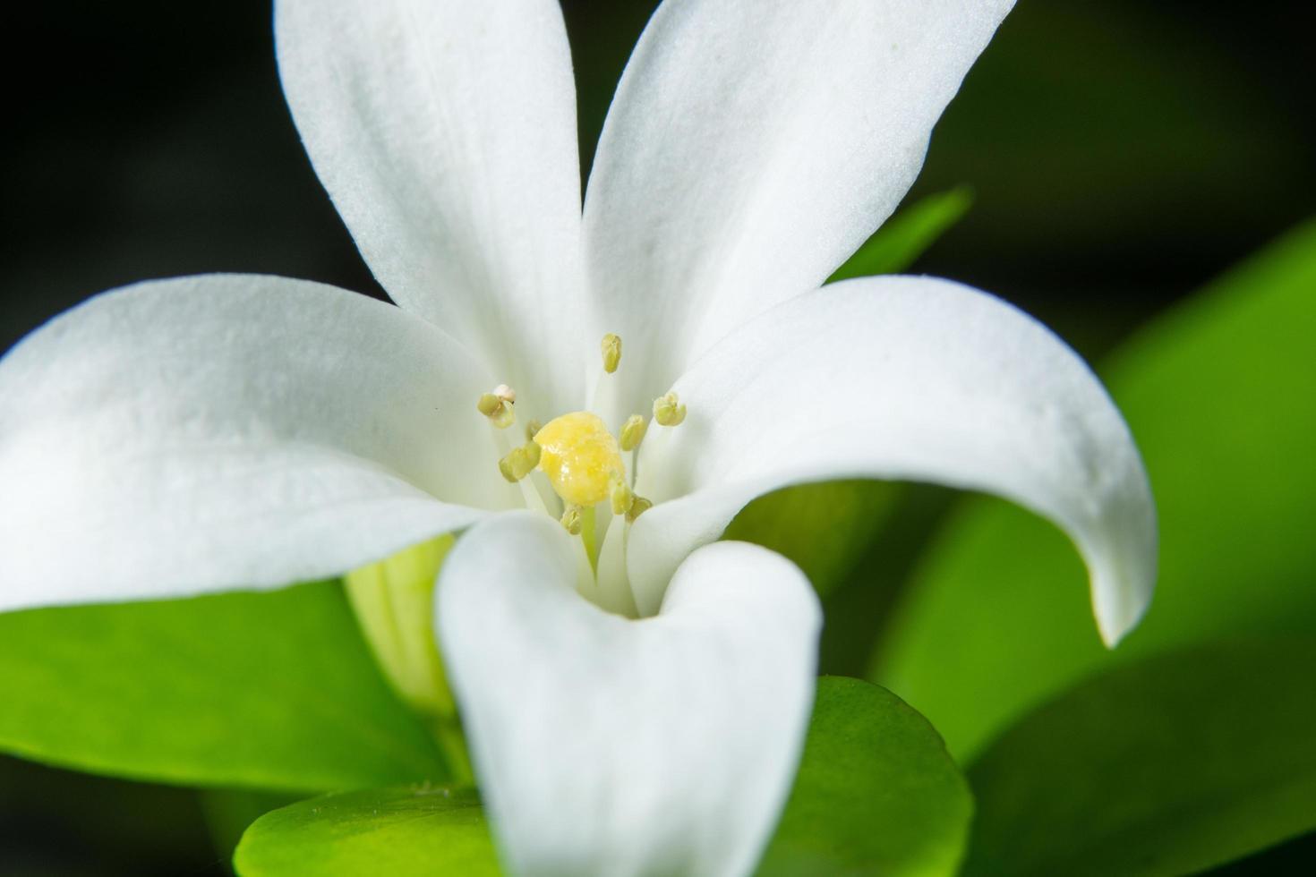 primer plano de flor blanca foto