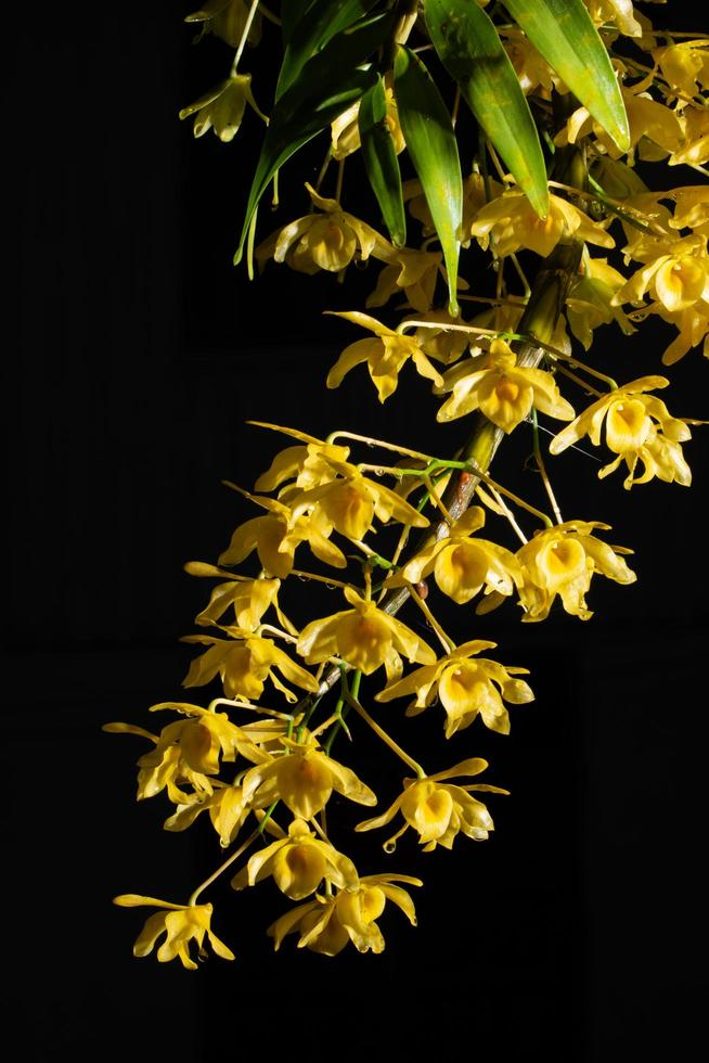 Yellow flower on black background photo