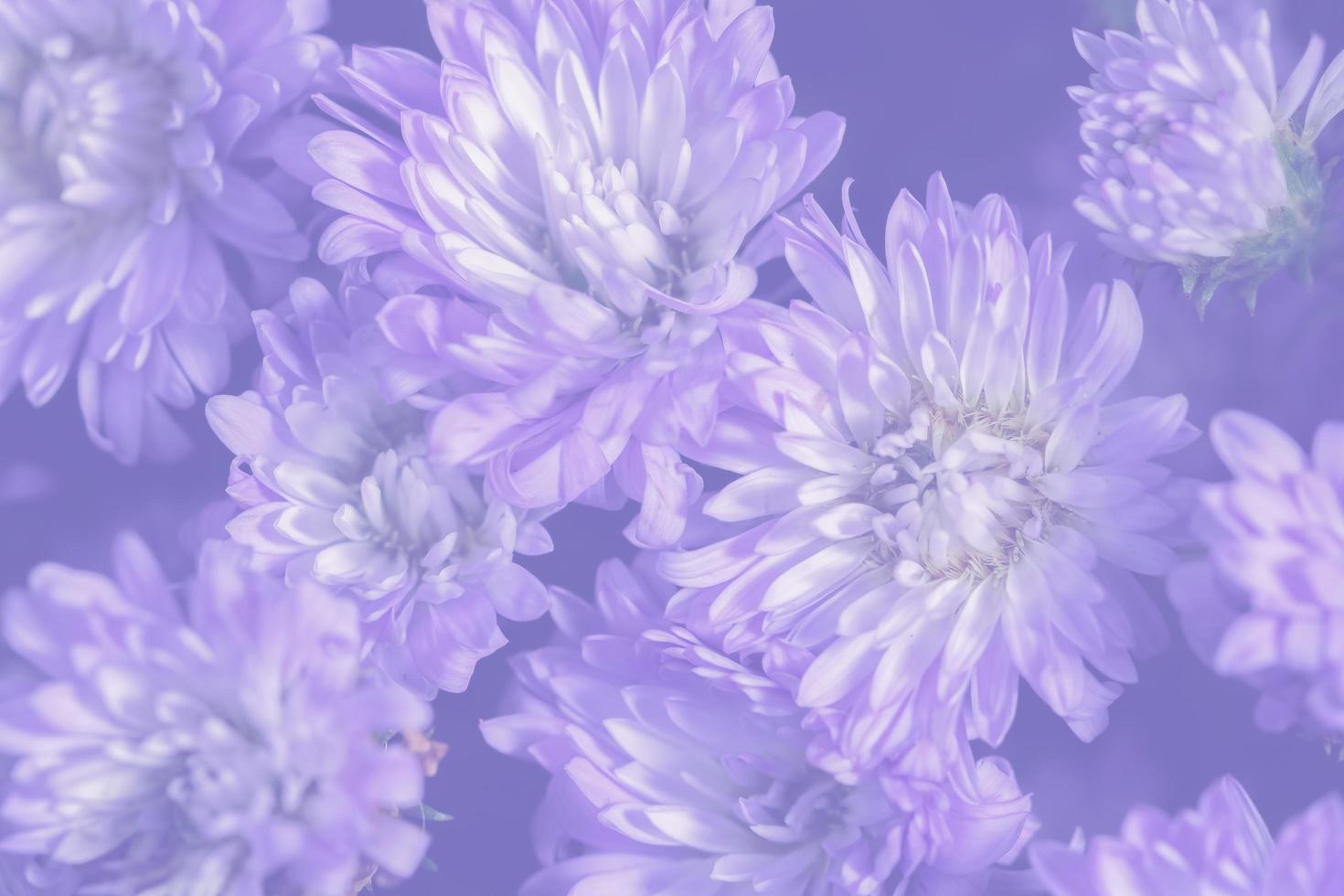 fondo de flor morada foto
