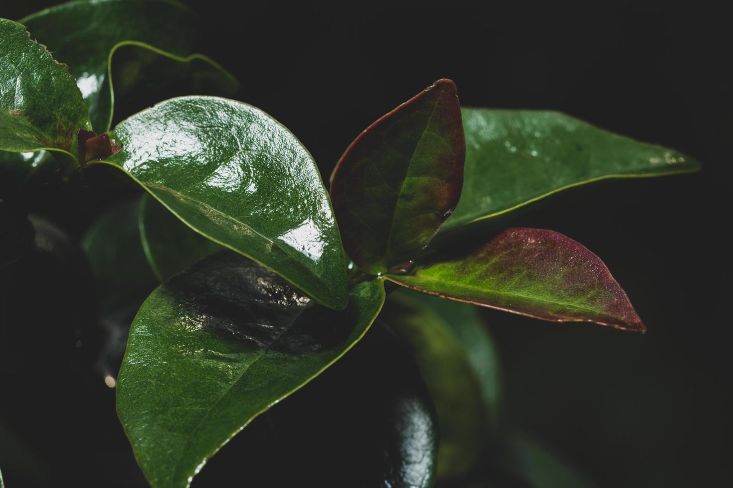 Dark leaves background photo