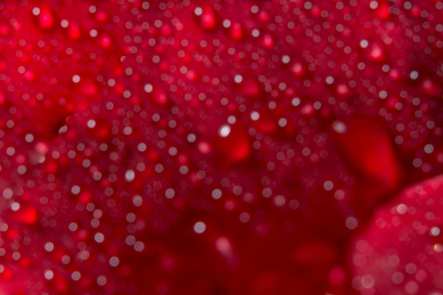Water drops on a red rose, blurred background photo