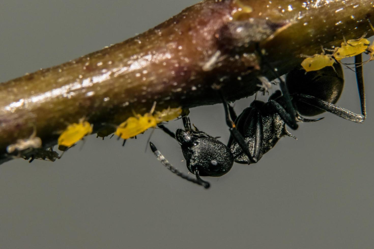 hormiga en una flor foto