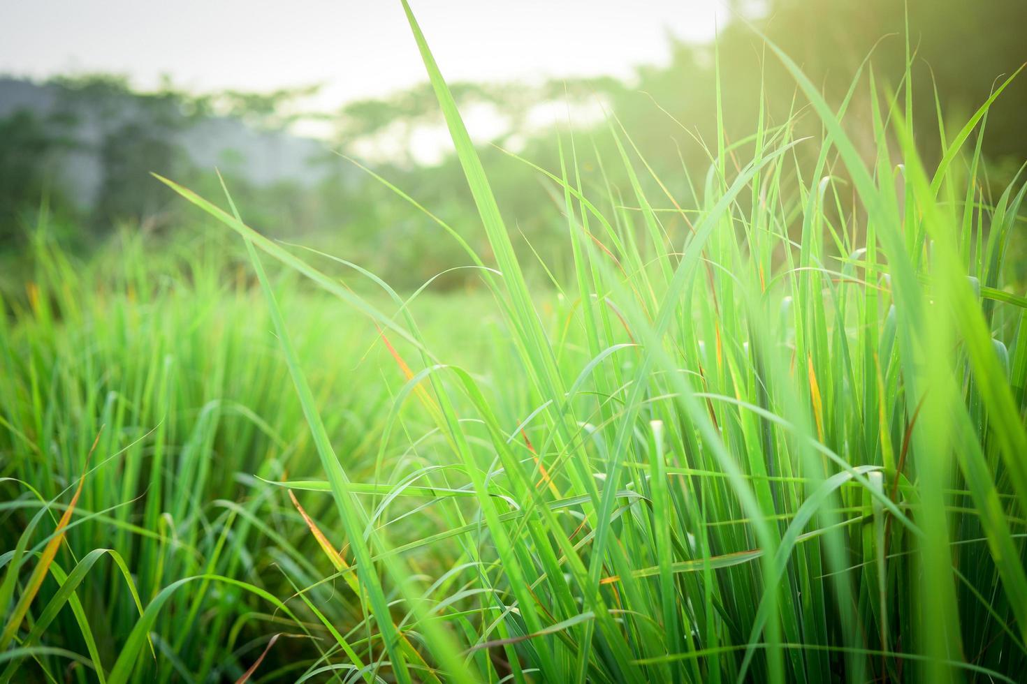 primer plano de la hierba foto