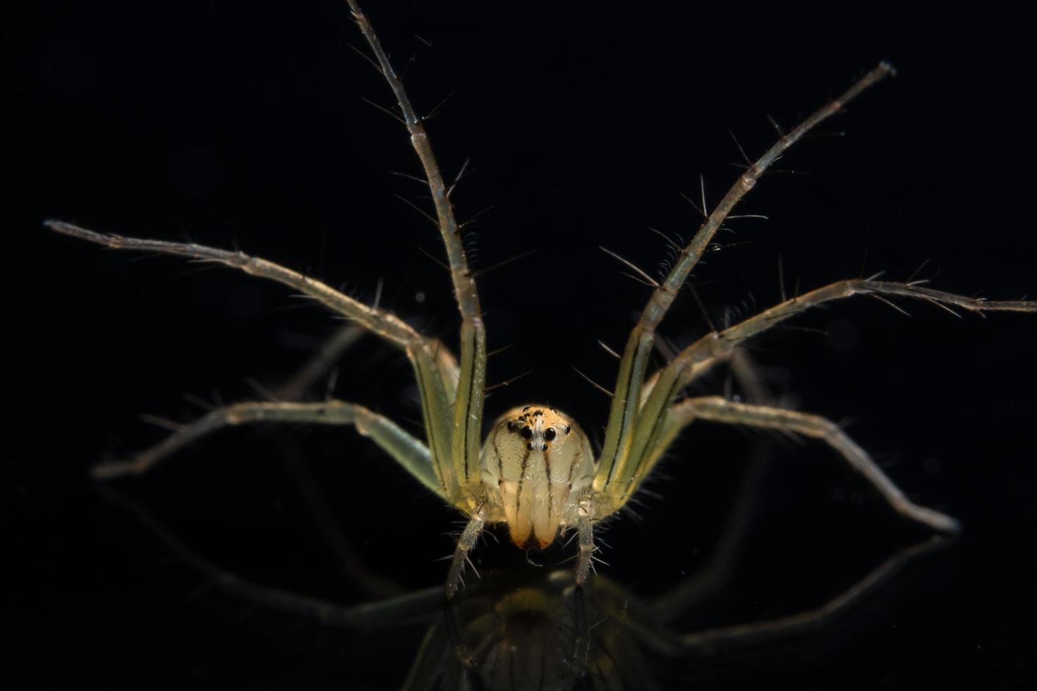 araña en espejo negro foto