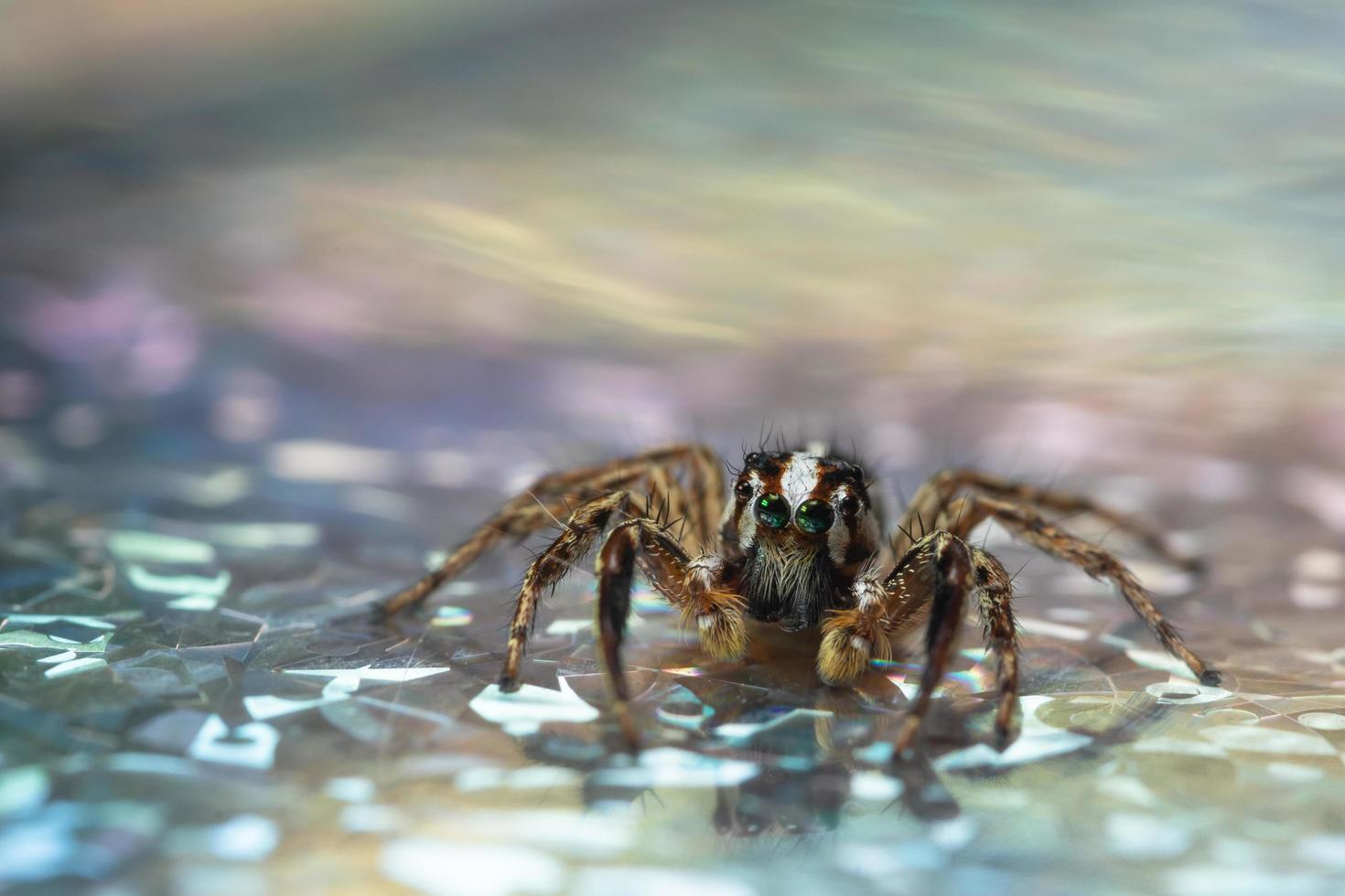 araña sobre una superficie reflectante foto