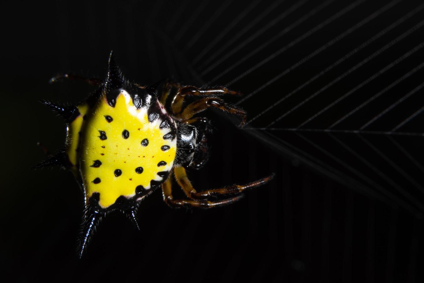 araña en la naturaleza foto