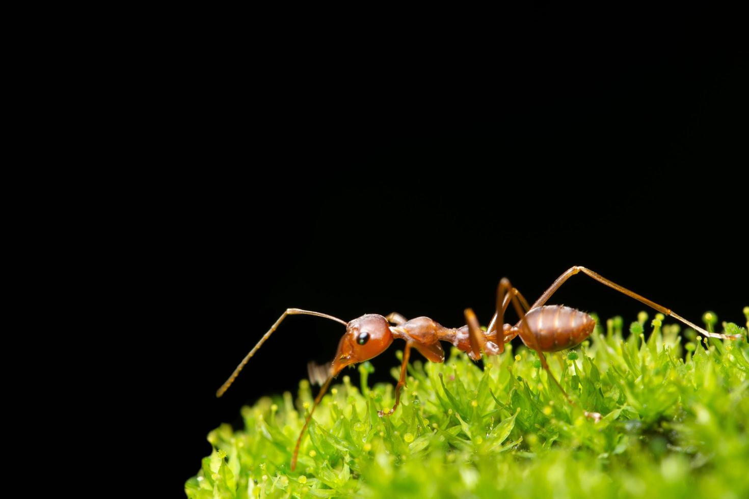 hormiga en la hierba foto