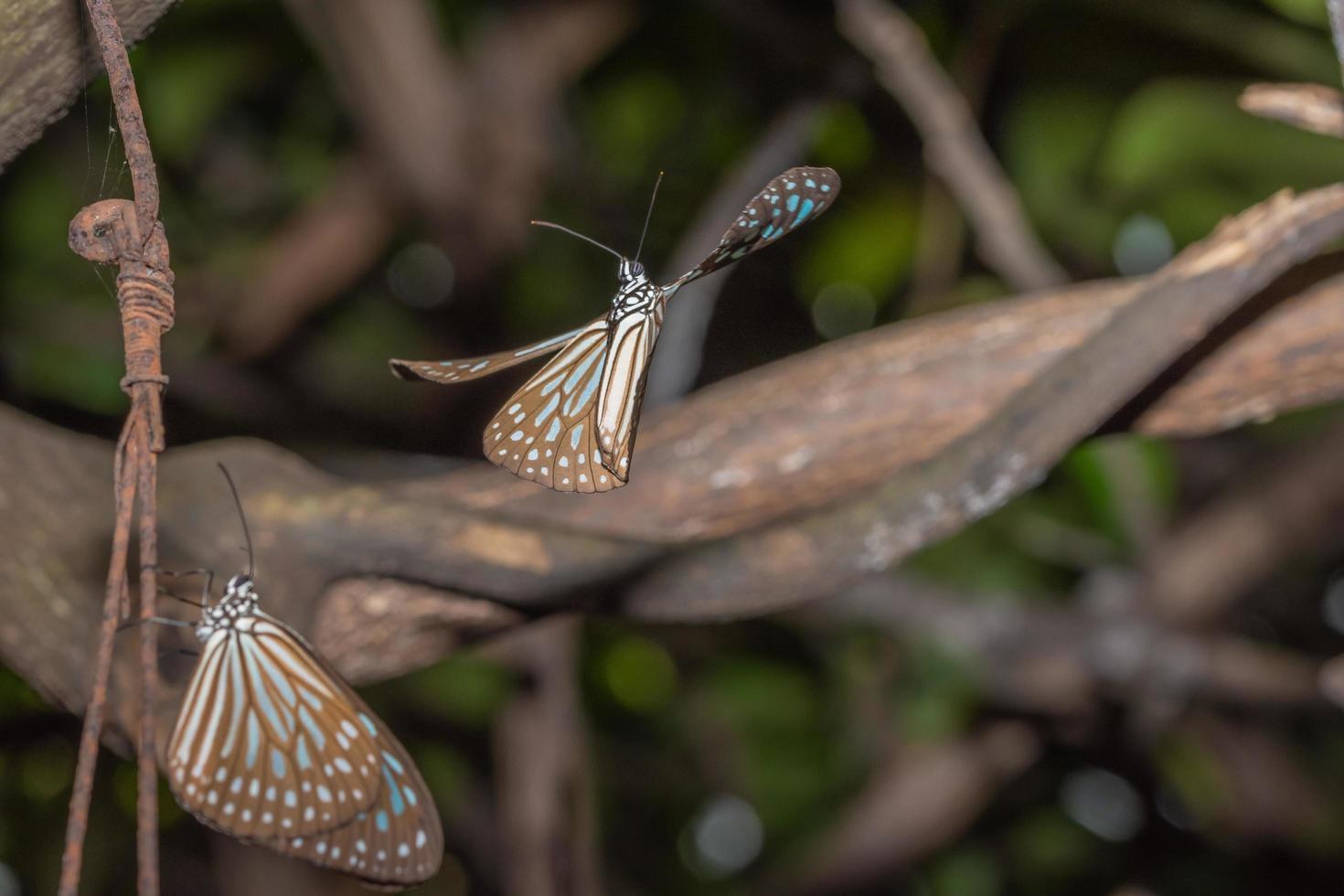 mariposas en la naturaleza foto