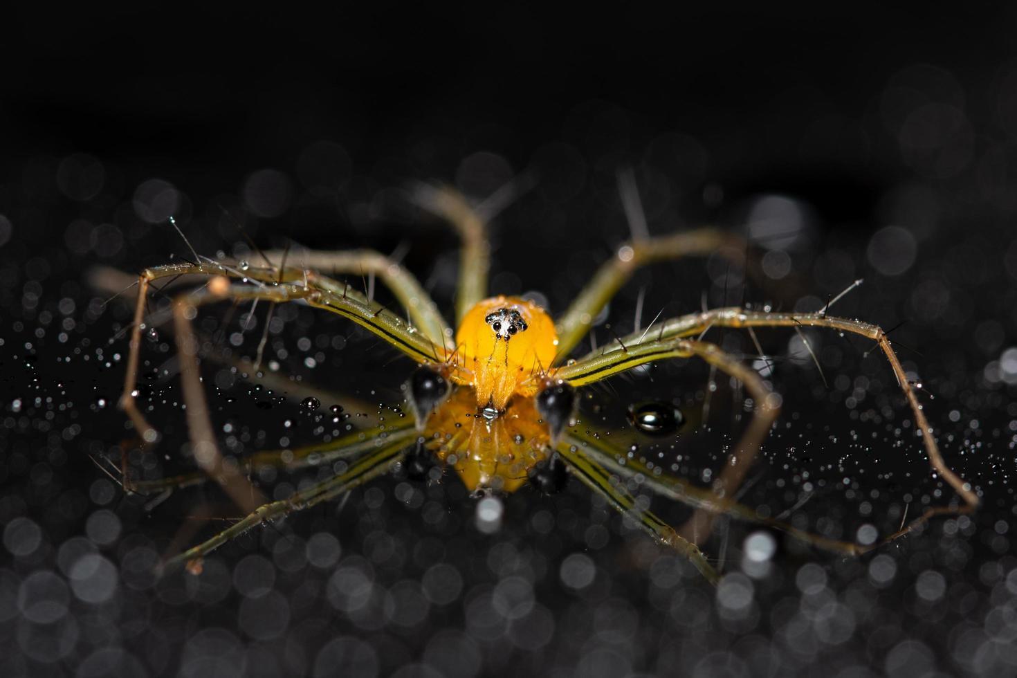 araña sobre un fondo reflectante foto