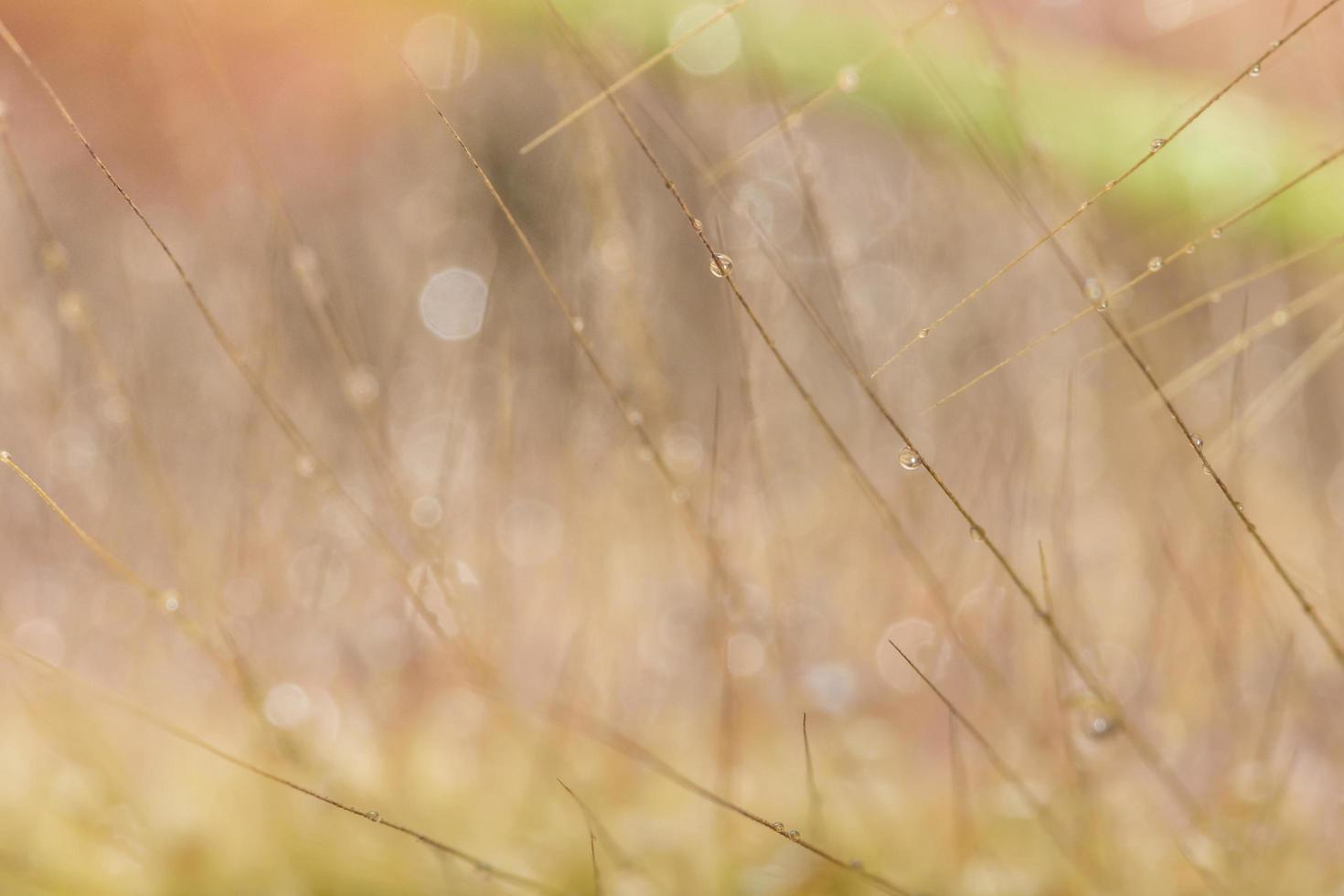Gotas de agua sobre flores silvestres, fondo borroso foto