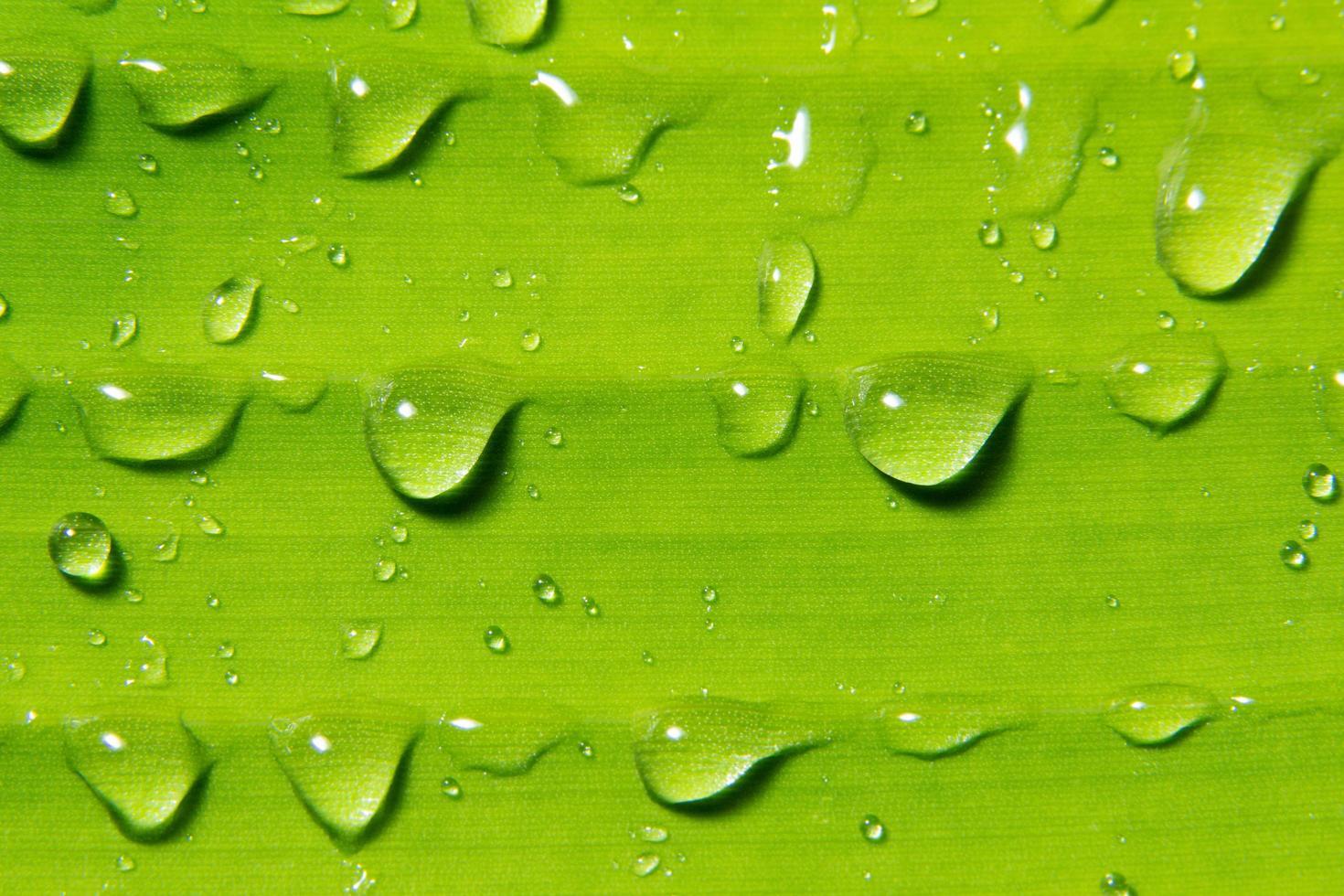 gotas de agua en la planta foto