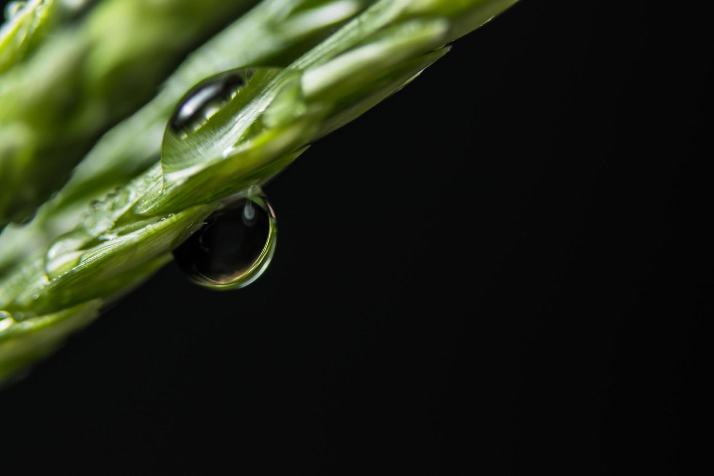 Water drops on a green plant photo
