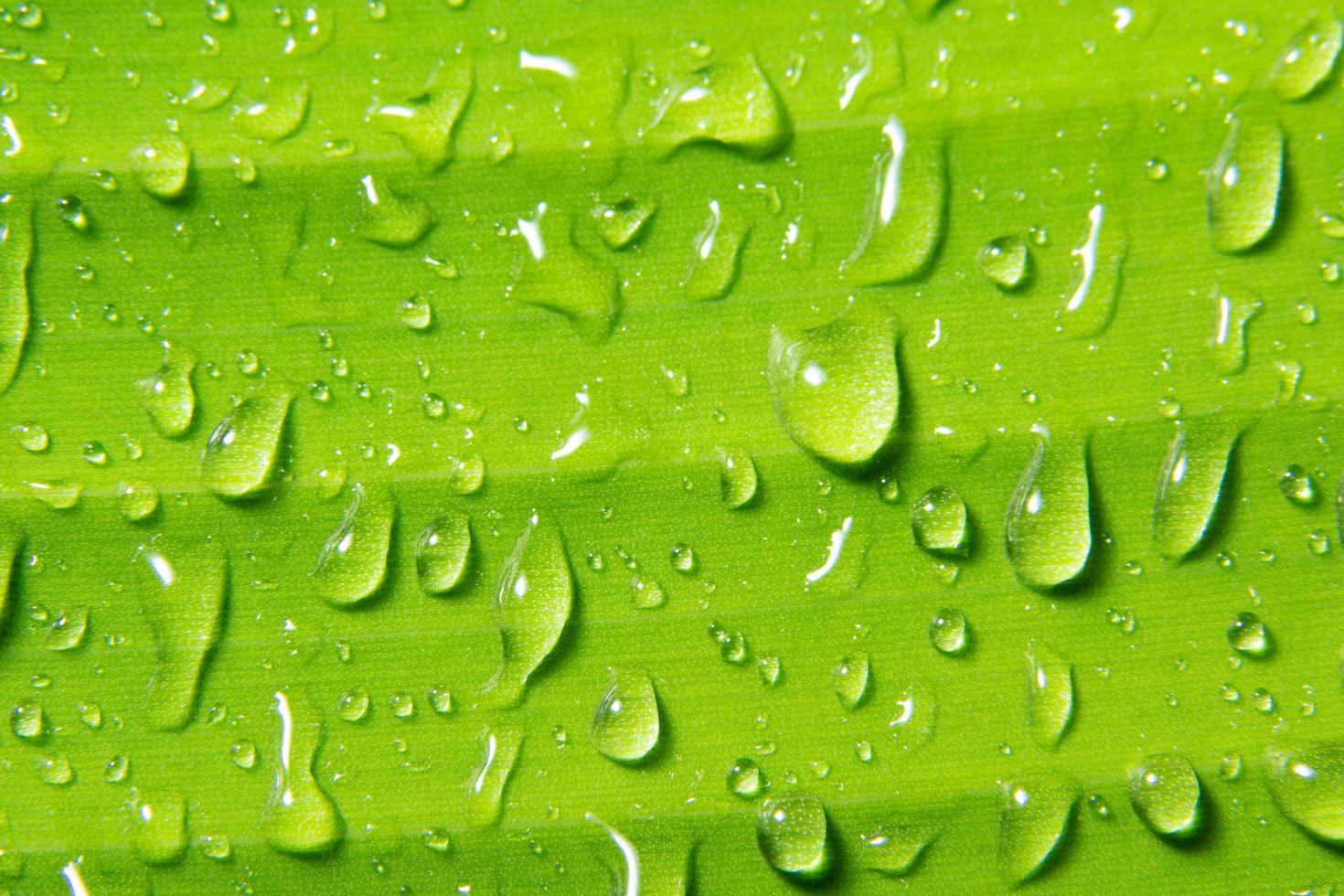 Water drops on plant photo