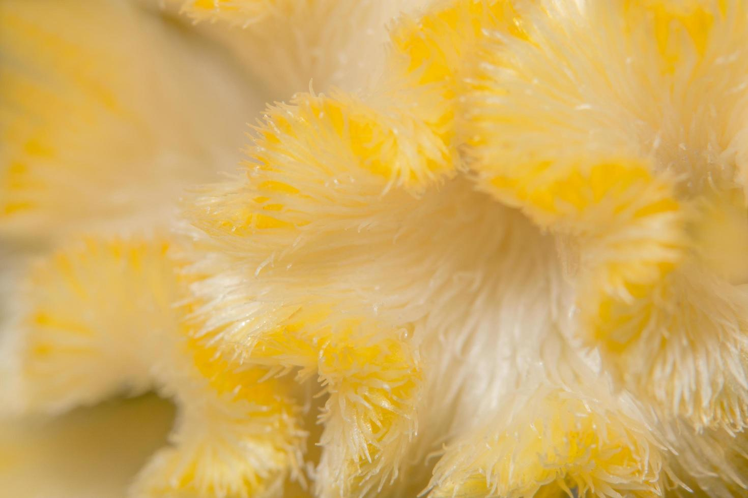 Macro flower pattern photo
