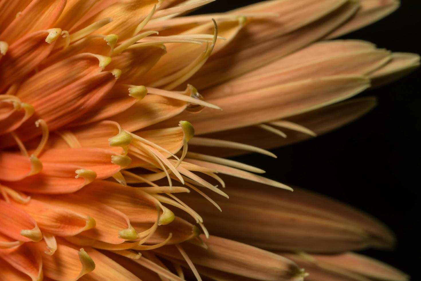 fondo flor amarilla foto