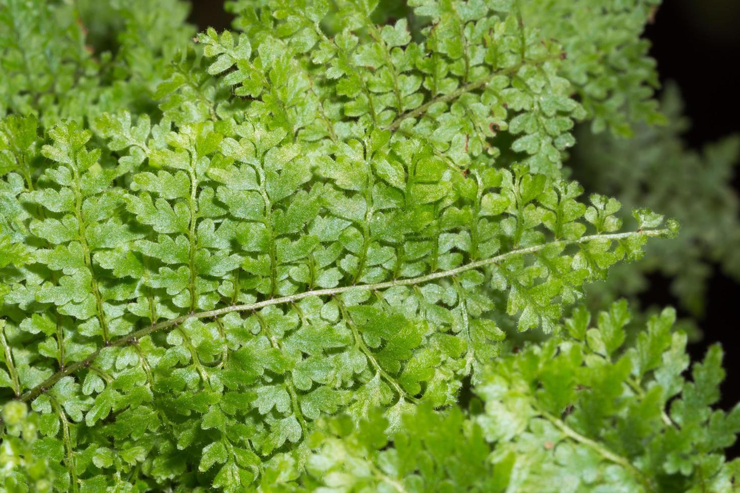 Green fern leaves background photo