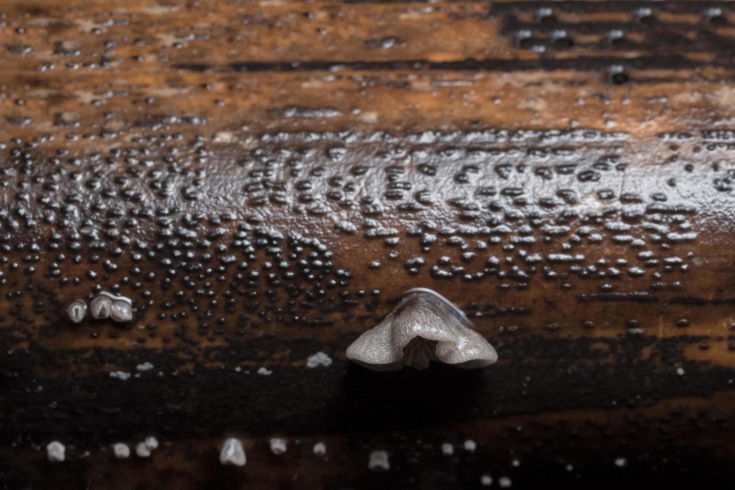 White fungus close-up photo