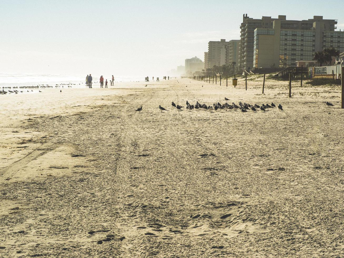 Daytona Beach, Florida, Winter, 2016 - A morning on the beach photo