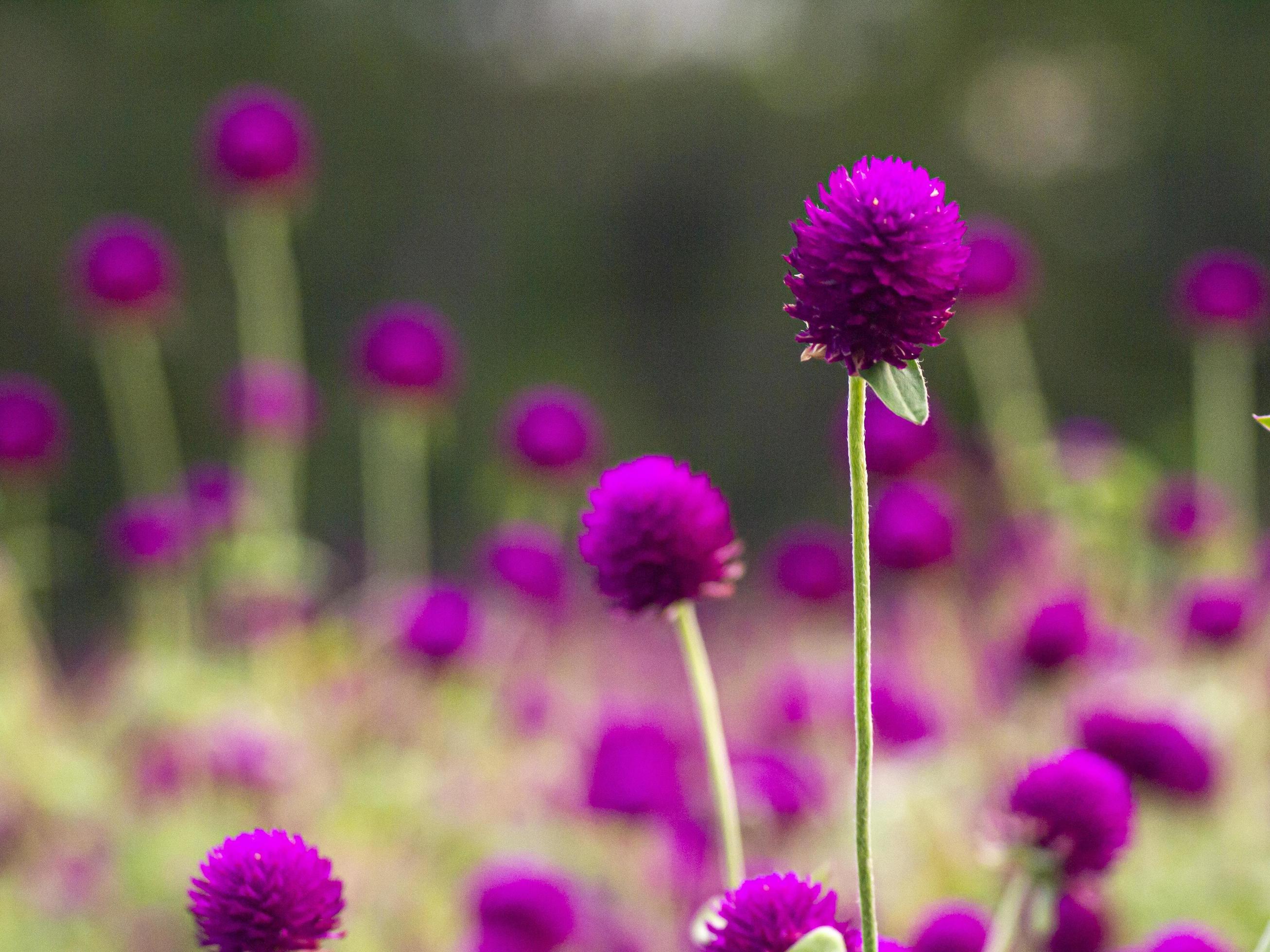 Vintage Background Little Flowers Nature Beautiful Toning Design Spring Nature Sun Plants Purple Flower Stock Photo