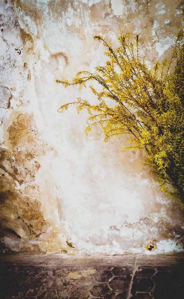 la luz del sol a través de las hojas foto